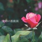 夕時の薔薇園
