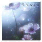 雫 & bokeh