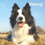 Patong!