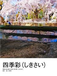 四季彩(しきさい)