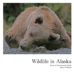 Wildlife in Alaska
