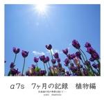 α7s 7ヶ月の記録 植物編