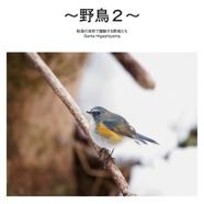 ~野鳥2~
