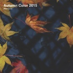 Autumn Color 2015