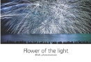 Flower of the light