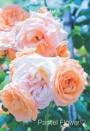 Pastel Flower♡
