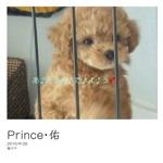 Prince・佑