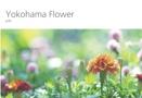 Yokohama Flower