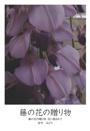 藤の花の贈り物