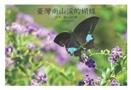 臺灣南山渓的蝴蝶