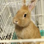 MOCCHI MEMORIES