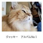 ジャッキー アルバムNo1