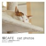 猫CAFE   cat photos