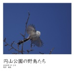 円山公園の野鳥たち