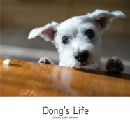 Dong's Life