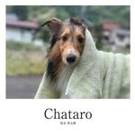 Chataro
