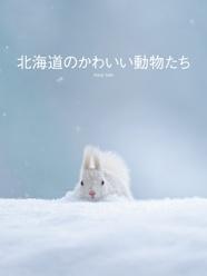 北海道のかわいい動物たち